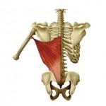 X線撮影には欠かせない知識 骨格と筋肉 動きについて